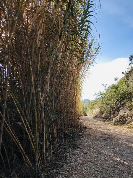 ruta de senderismo en Xàtiva